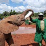 ケニアの歴史とコーヒー栽培